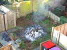 Gardenfire Morning